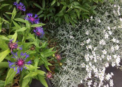 Beplanting-plantenborder-in-tuinontwerp