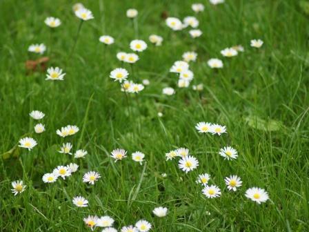 gras maaien tuinkalender
