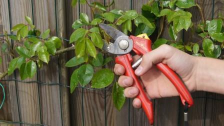 tuin onderhoud snoeien