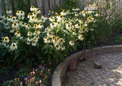 Beplantingsplan tuin Montfoort Utrecht Echinacea