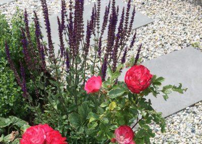 Klimaatbestendige tuin - Montfoort tuinarchitect