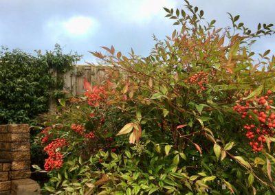 Klimaatbestendige tuin - tuinarchitect Montfoort