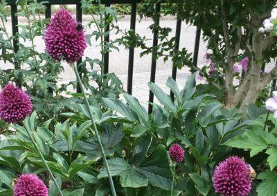 Tuinontwerp klimaatbestendige tuin Montfoort