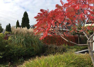 beplantingsplan herfstkleuren
