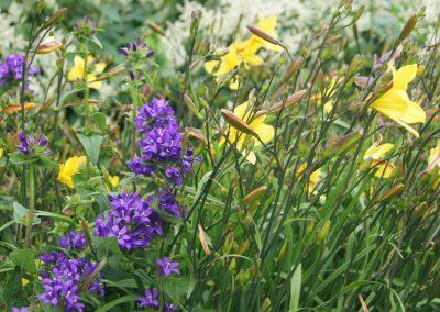 beplantingsplan met daglelie en Campanula