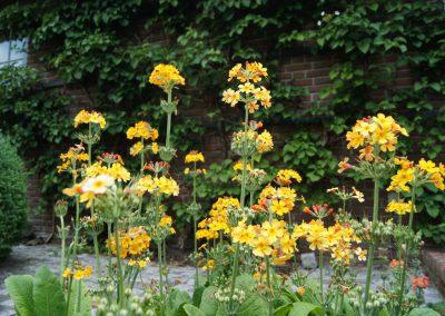 tuinarchitectuur - beplantingsplan Primula