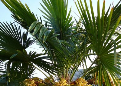 Met palmbomen