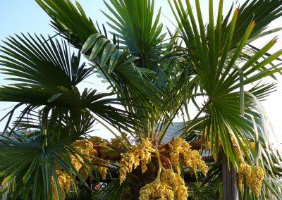 tuinontwerp tropisch exotisch