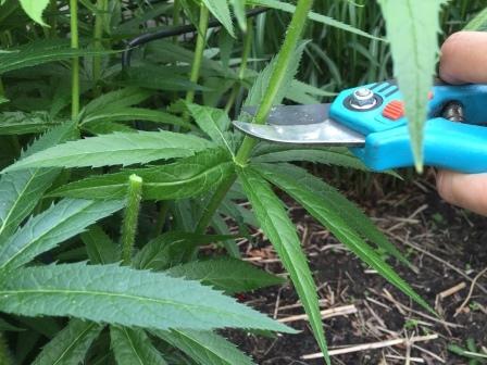 tuinkalender vaste planten snoeien mei