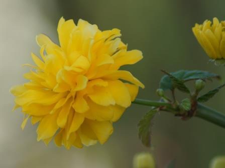 tuinkalender struiken snoeien voorjaar