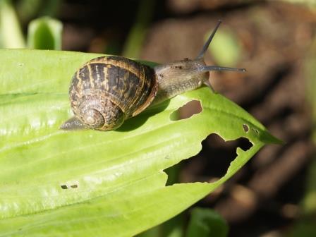 tuinkalender slakken bestrijden