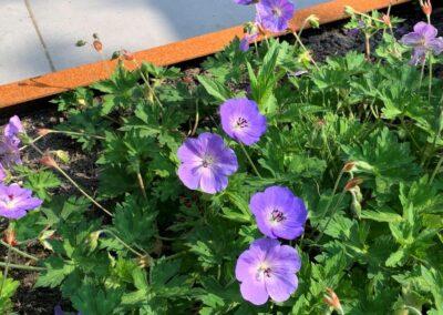 Onderhoudsarme tuin tuinontwerp Kamerik