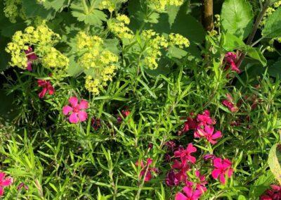 Onderhoudsarme tuin Kamerik - sterke planten