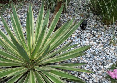 tuinontwerp strandtuin planten