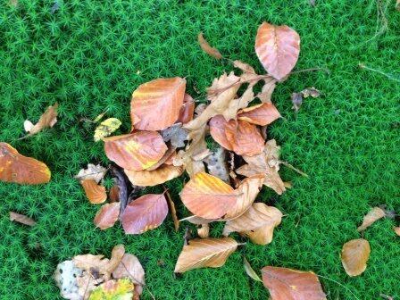 gazon onderhoud herfst